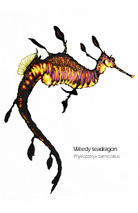 weedy sea dragon drawing
