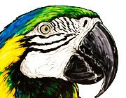 Blue-and-yellow macaw parrot illustration